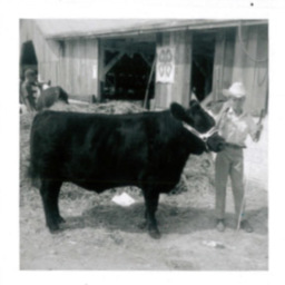 Unknown Boy Show Cow