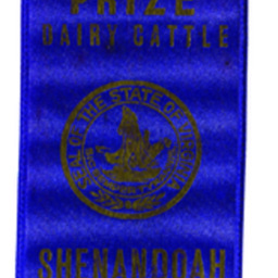 First Prize Dairy Cattle Ribbon